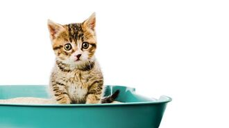 How to litter train a kitten or cat