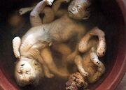 Agent-orange-dead-deformed-babies
