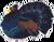 Capercailie symbol