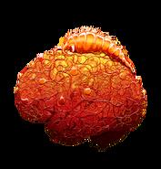 Fully grown Neurax Worm