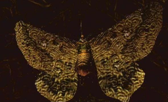 File:Giant Noctpteran.jpg