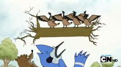 Regular show-a bunch of full grown geese 0006