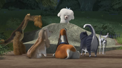 Fifi pets meeting open season 2