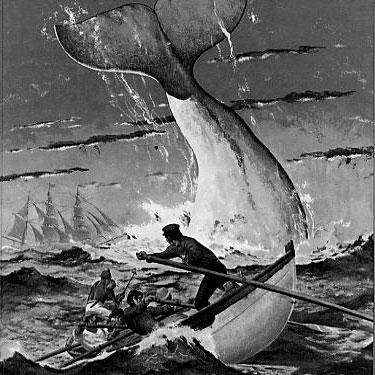 File:Moby Dick.jpeg