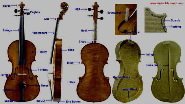File:Violin reference 1.jpg