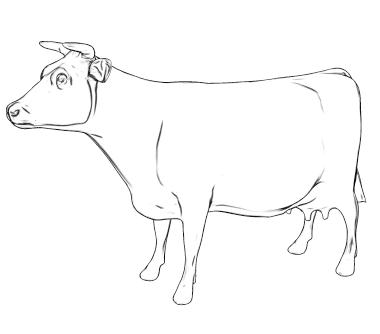 Plik:Cow.png