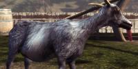 Pilgor (Goat Simulator)