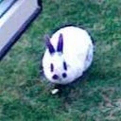 Walter rabbit