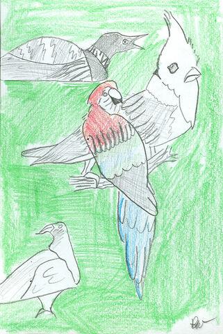 File:Robert Pinchin BIRDS.jpg