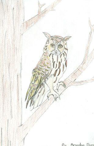 File:Brandon Ponce Wild Owl.jpg