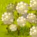 Plant Cotton