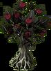 Mahogany Tree