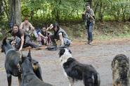 AMC 510 Group Encounter Dogs