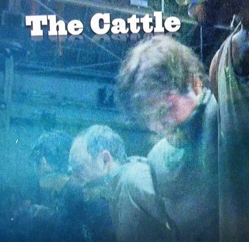 File:Cattle.jpg