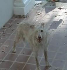 File:Walking dead 1 eyed dog.png