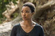 Sasha Williams 7x14 Promotional Image