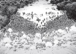 Issue 158 Herd