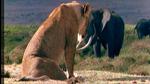 Lion WWD