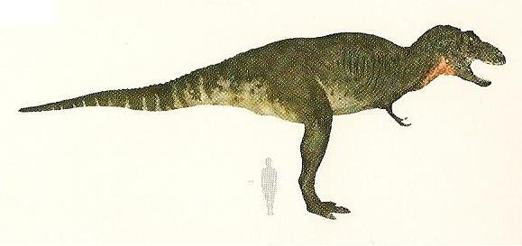 File:Tyrannosaurus Size.jpeg