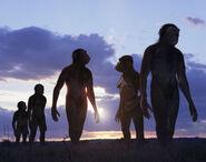 Evi australopithecus large