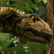 Allosaurus robustus