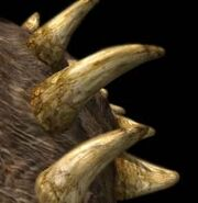 Polacanthus p3