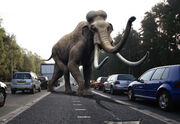 Columbin Mammoth