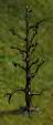Historical-Tree-3