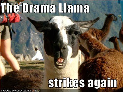 File:The drama llama.jpg