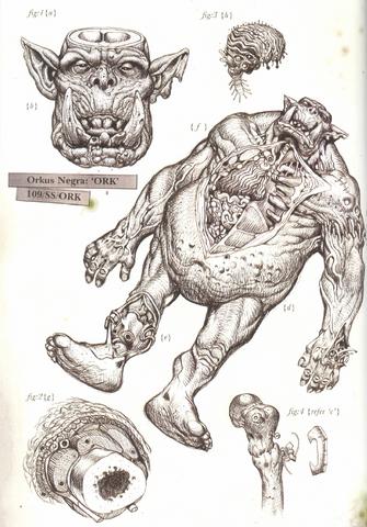 File:Ork Post-Mortem Sketch.png