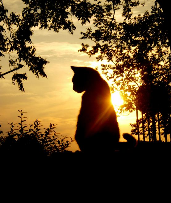 Cat-and-sunset