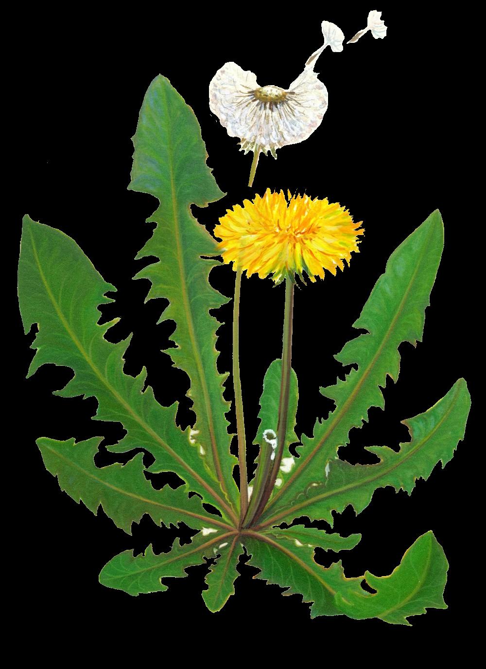 garden weeds clipart - photo #24