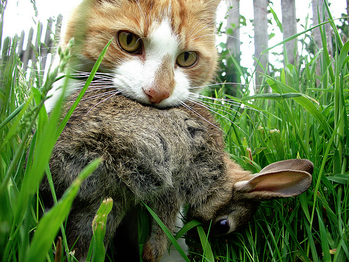 File:Flarekit with hare.png