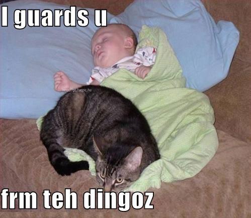 File:Guard-cat.jpg