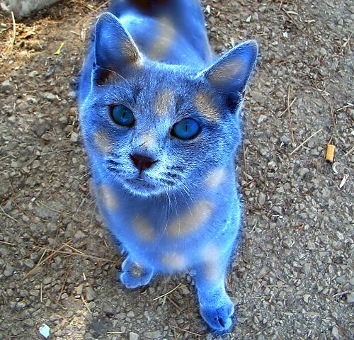 Ice Blue Cat Eyes