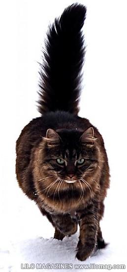 Williamcat