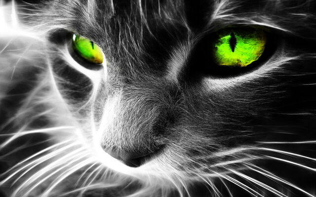File:Black and white image of cats face with its eyes highlighted in neon green 1920x1200 6a8c3f74.jpg