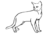 Short furred female cat blank by shellythelast-d5fle4h