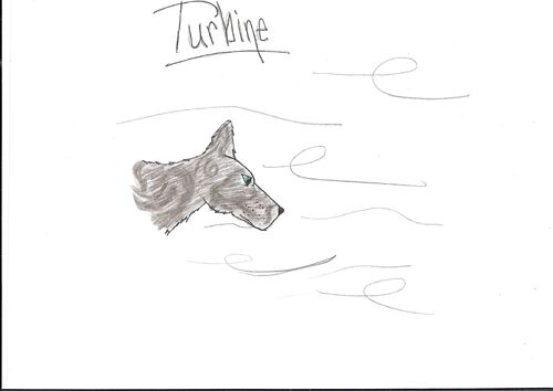 Turbine drawing