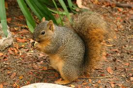File:Squirrel1.jpeg