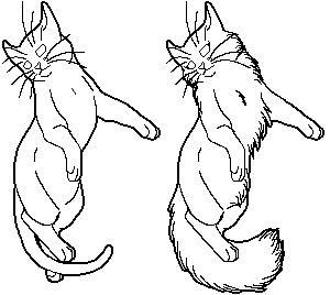 File:StarClan both.png