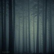 The Pine Forest by pheelfresh