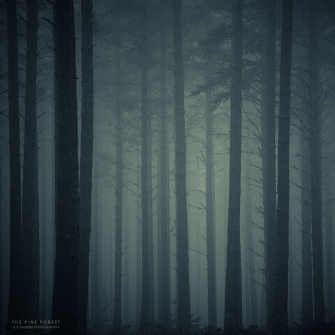 File:The Pine Forest by pheelfresh.jpg
