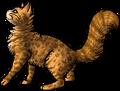 Leopardstar.deputy