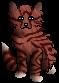 Foxy.kit