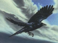 Storm Crow (Rain Bird)