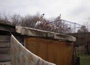 Porcelanowa (nr 19, ptaki)