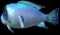 File:Gold Chest Fish.png