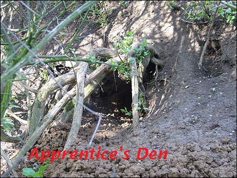 Apprentice Den Camp Image
