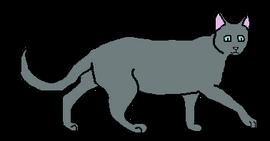 Male Shorthair Loner-3